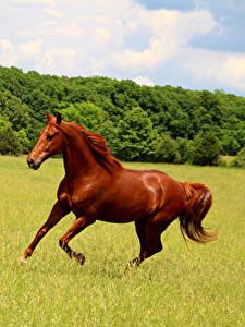 Bilder Grünland Hauspferd Laufsport Tiere