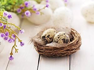 Bilder Feiertage Ostern Federn Bretter Ei Nest