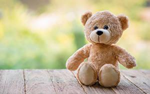 Fotos Spielzeuge Teddybär Bretter Sitzend
