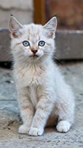 Fotos Hauskatze Kätzchen Sitzend Starren ein Tier
