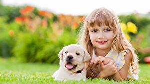 Wallpapers Dogs Little girls Staring Retriever Face Lovely Puppy Beautiful Children