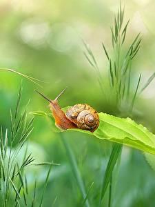 Bilder Hautnah Schnecken Pflanzen Gras ein Tier Natur