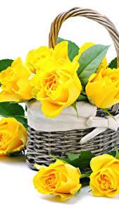 Hintergrundbilder Rose Nahaufnahme Weißer hintergrund Gelb Weidenkorb Blüte
