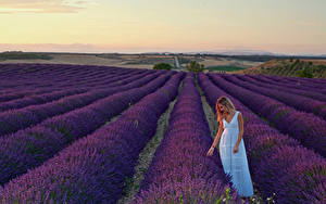 Wallpaper Fields Lavandula Blonde girl Dress Nature Girls