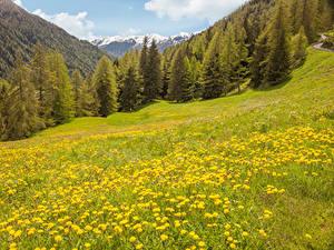 Hintergrundbilder Italien Berg Wald Löwenzahn Grünland Tirol