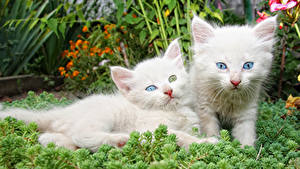 Picture Cats Kitty cat Two White Animals