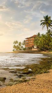 Fotos Sri Lanka Tropen Landschaftsfotografie Küste Himmel Meer Palmen Wolke Natur