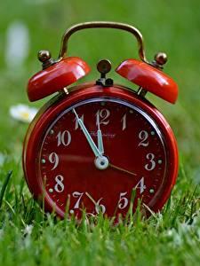 Fotos Uhr Zifferblatt Wecker Großansicht Gras