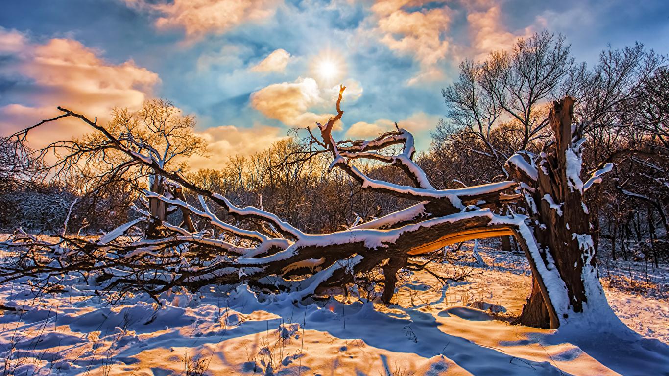 Hintergrundbilder Natur Sonne Winter Schnee Himmel Ast Wolke 1366x768