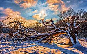 Wallpapers Winter Sky Snow Branches Sun Clouds