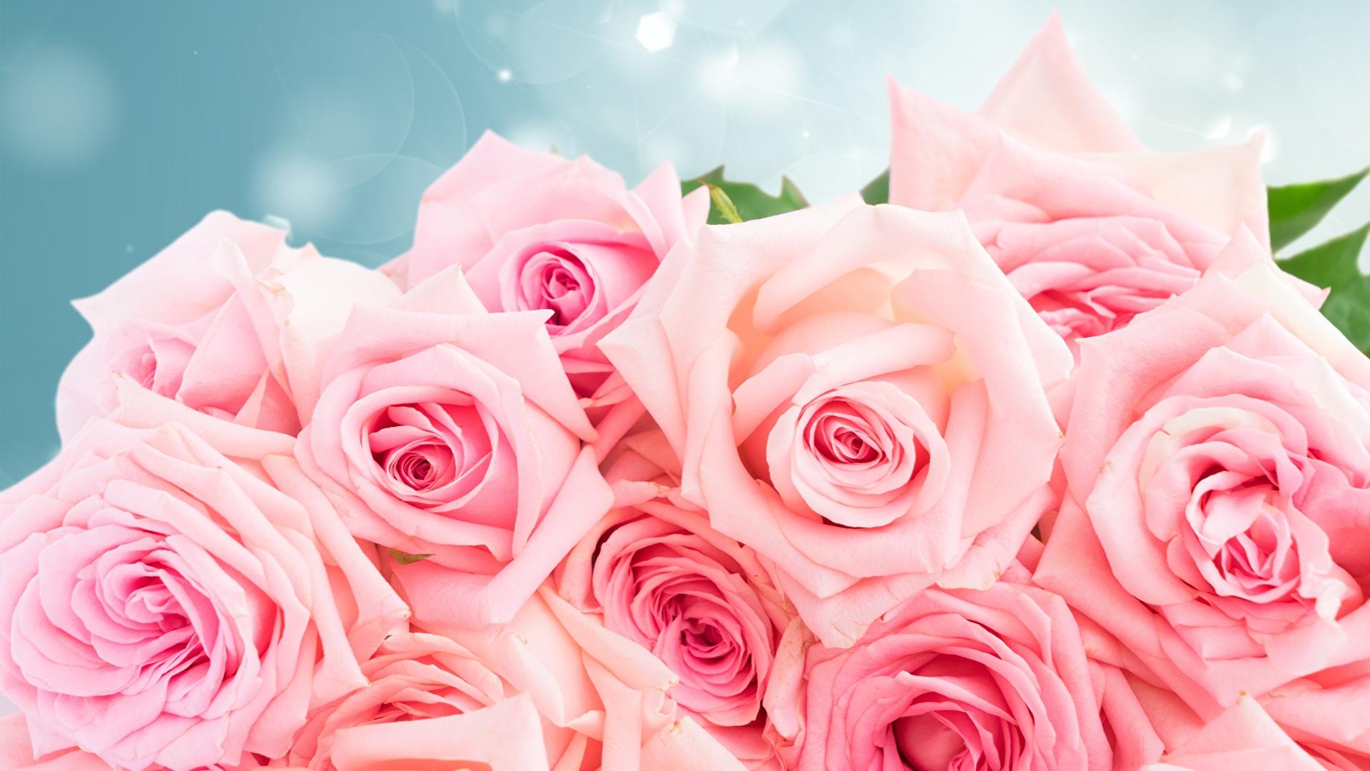 壁紙 1920x1080 バラ ピンク 花 ダウンロード 写真
