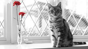 Fotos Hauskatze Fenster Starren Tiere