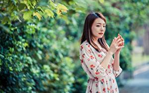 Bilder Asiaten Bokeh Posiert Kleid Hand Braunhaarige Mädchens