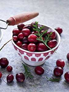 Bilder Beere Moosbeeren Farbigen hintergrund Ast Cranberry Lebensmittel
