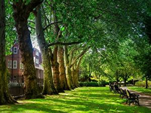 Images England Parks London Trees Grass Bench