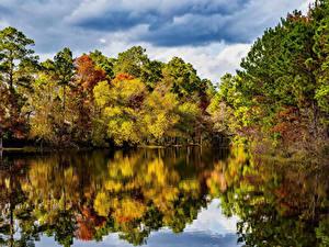 Bilder USA Flusse Wälder Herbst Texas Natur