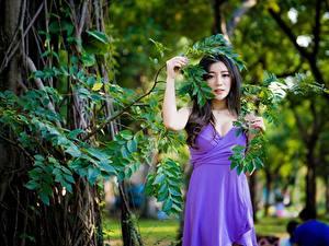 Fotos Asiaten Bokeh Ast Kleid Brünette Posiert junge frau
