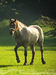 Fotos Pferde Grünland Tiere