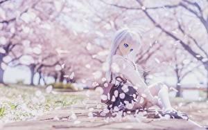 Hintergrundbilder Puppe Blondine Sitzt Schöne Japanische Kirschblüte