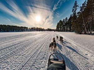 Bilder Finnland Winter Sonnenaufgänge und Sonnenuntergänge Wege Hunde Schnee Northern Ostrobothnia Natur