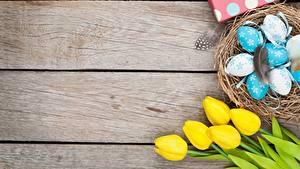 Fotos Feiertage Tulpen Ostern Eier Nest Bretter