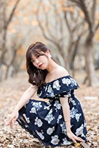 Hintergrundbilder Asiatische Bokeh Bäume Blattwerk Kleid Braune Haare Blick Sitzend junge Frauen