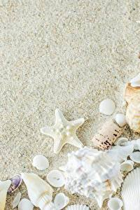 Hintergrundbilder Muscheln Seesterne Sand Vorlage Grußkarte