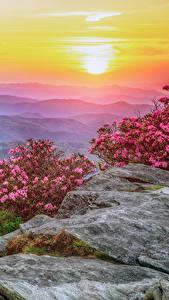 Bilder USA Landschaftsfotografie Sonnenaufgänge und Sonnenuntergänge Rhododendren Hügel Strauch Roan Mountain Rhododendron Gardens