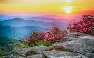 Pictures USA Landscape photography Sunrises and sunsets Rhododendron Hill Bush Roan Mountain Rhododendron Gardens