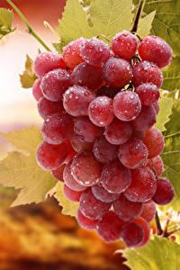 Hintergrundbilder Weintraube Tropfen