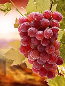 Hintergrundbilder Weintraube Tropfen das Essen