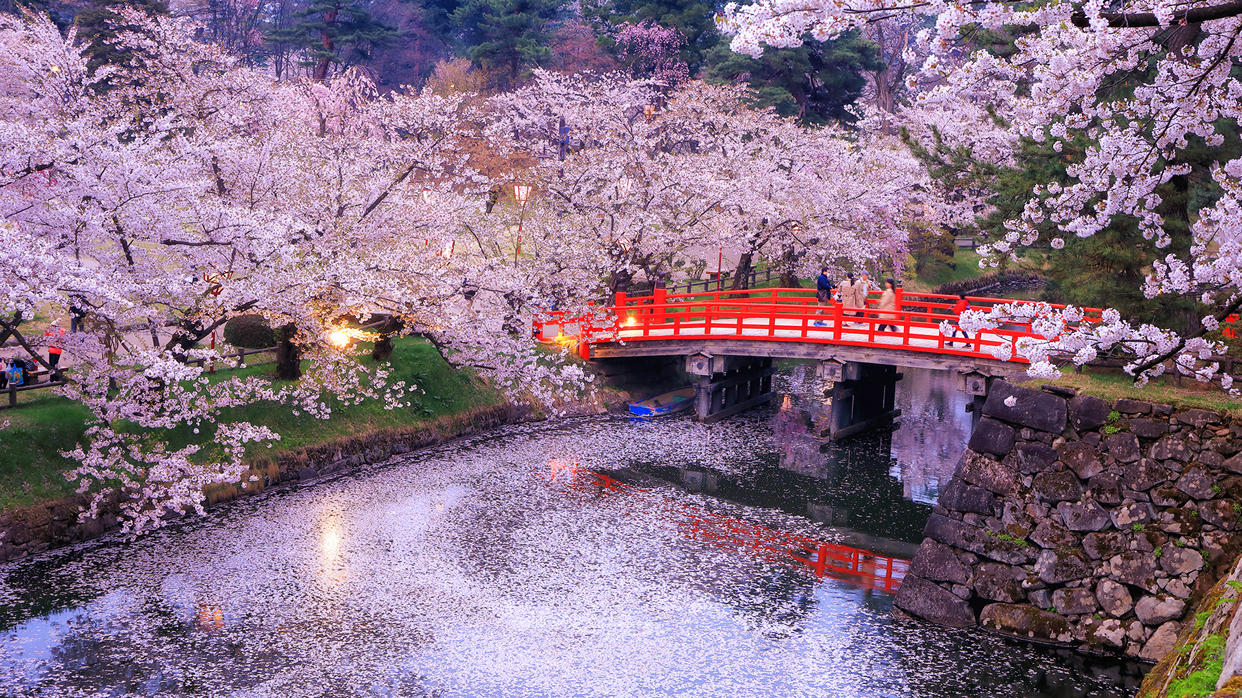 Photos Tokyo Japan Nature bridge Parks river Evening Flowering trees 2560x1440 Bridges park Rivers