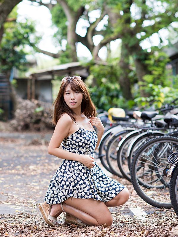 600x800 Asiático Cabello castaño Bokeh Vestido Bicicleta mujer joven, mujeres jóvenes, asiática, bicicletas, pelo castaño, fondo borroso Chicas para móvil Teléfono