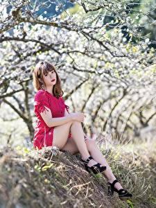 Bilder Blühende Bäume Asiatische Bokeh Braune Haare Sitzend Kleid Bein High Heels Mädchens