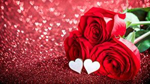 Papéis de parede Dia dos Namorados Rosas En gran plano Vermelho Três 3 Coração Flores