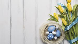 Fotos Ostern Tulpen Federn Bretter Nest Eier Band Blumen