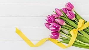 Hintergrundbilder Tulpen Bretter Schleife Band Blumen