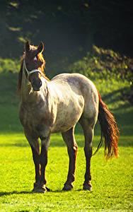 Fotos Grünland Pferd ein Tier