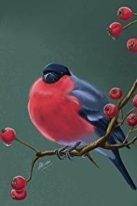 Picture Birds Bullfinch Sorbus Painting Art Branches Svetlana Antonova Animals