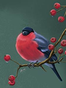 Hintergrundbilder Vogel Gimpel Eberesche Gezeichnet Ast Svetlana Antonova Tiere