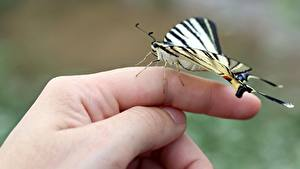 Hintergrundbilder Finger Schmetterling Hautnah Hand Natur
