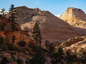 Fotos USA Zion-Nationalpark Park Bäume Natur