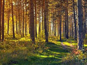Hintergrundbilder Wälder Bäume Gras Weg Natur