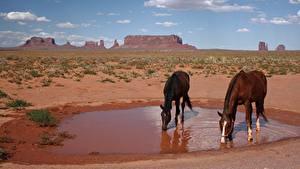 Hintergrundbilder Park Pferde USA Zwei Trinkt Wasser monument Valley Park, Utah Tiere