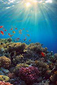 Fotos Unterwasserwelt Koralle Fische Lichtstrahl