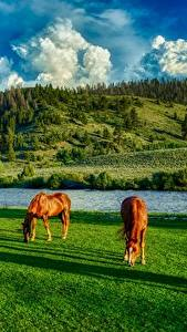 Photo Rivers Horses USA Grasslands HDRI Hill Grass Wyoming animal