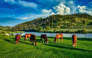 Fotos Flusse Hauspferd Vereinigte Staaten Grünland HDRI Hügel Gras Wyoming Tiere