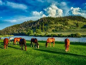 Fotos Flusse Pferd Vereinigte Staaten Grünland HDRI Hügel Gras Wyoming ein Tier