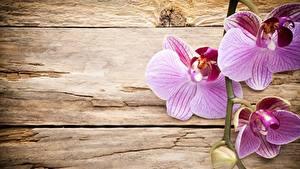 Hintergrundbilder Orchideen Rosa Farbe Bretter Blumen