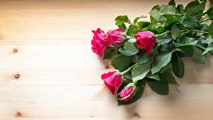 Fotos Rosen Bretter Rot Blumen